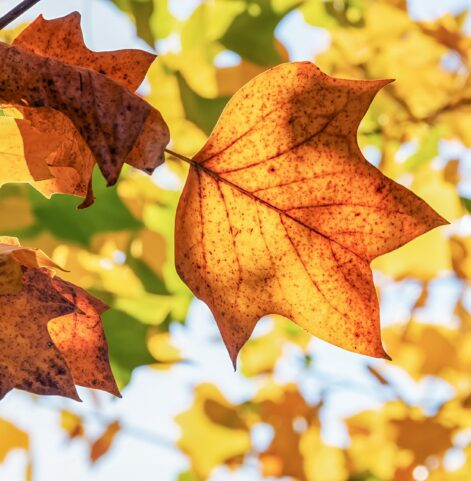 Why you Should Sell your Home in the Fall